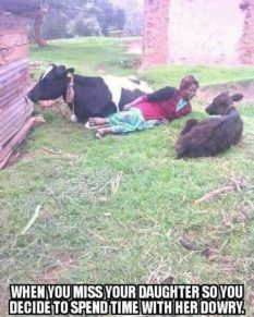 woman chills with cows